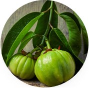 Екстракт от плодове на Гарциния Камбоджа